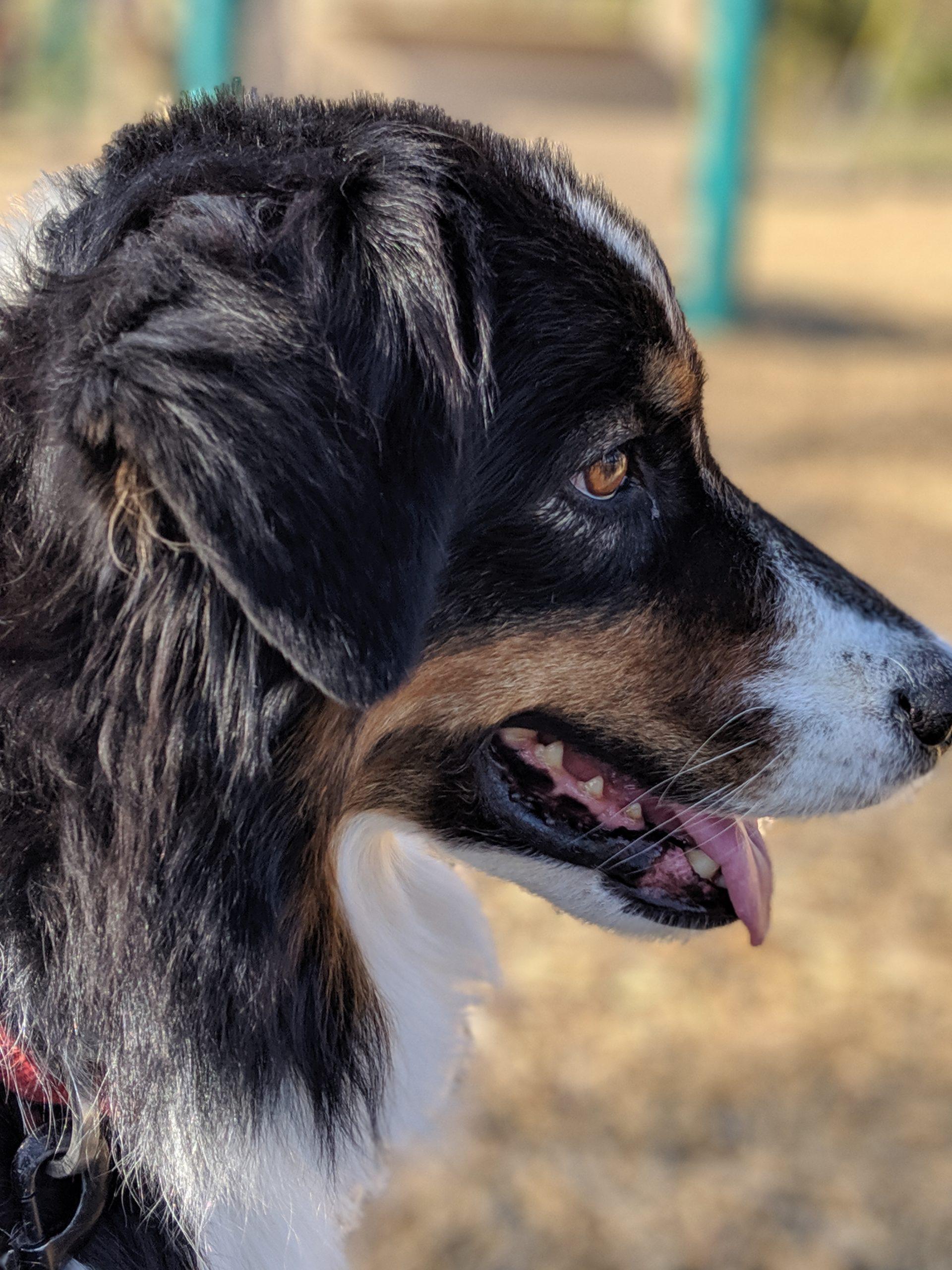 Dallas Fort Worth Dog Training
