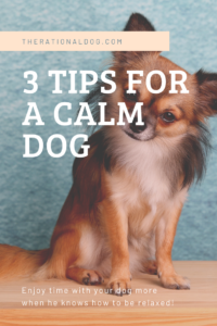 How to train your dog how to relax in your home.