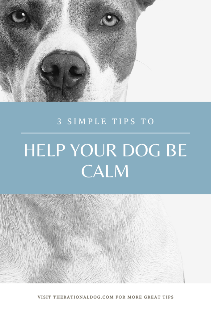 Train your dog to be calm and relaxed with these 3 exercises.