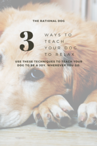 Use these 3 tips to train your dog to be calm and relaxed on command.