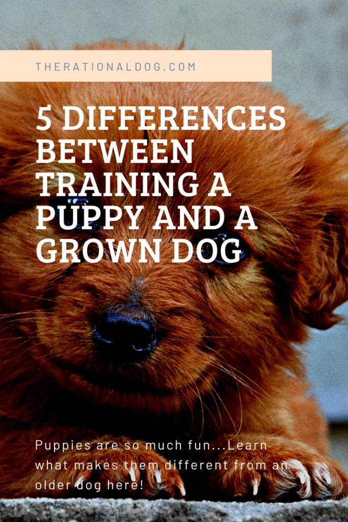 Differences in puppy training and dog training. Dogs and puppies need different training techniques!