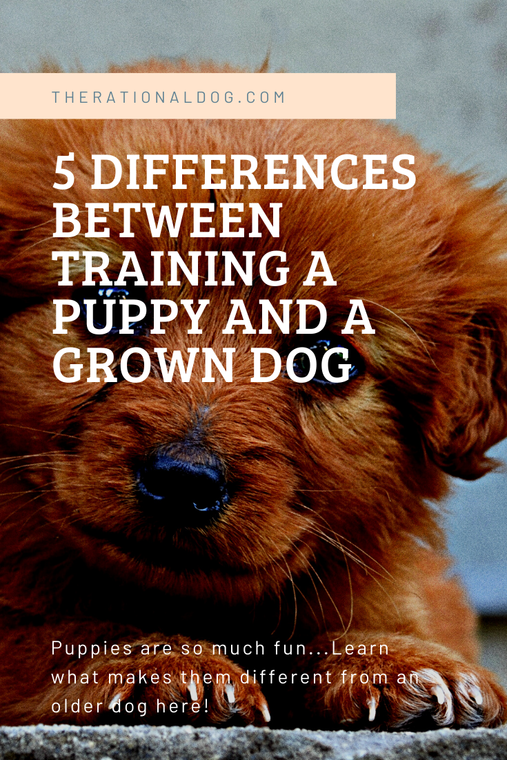 Learn the difference in training techniques for a puppy and a grown dog.