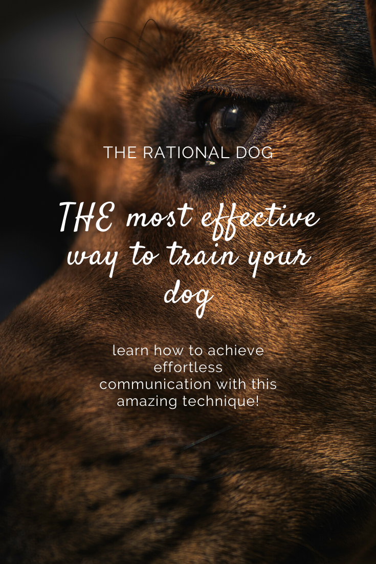 Best Dog Training Techniques