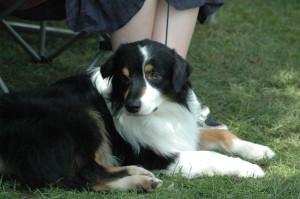 Dog | Dog training | Dallas Dog Training