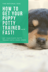 3 Simple Tips to potty train your puppy.