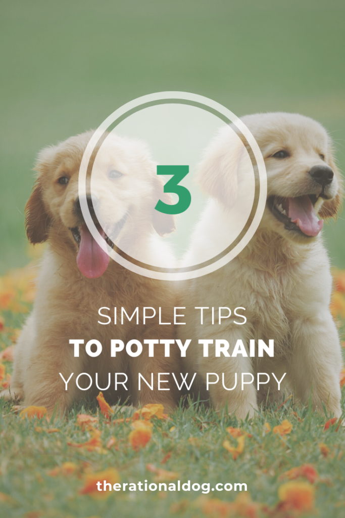How to Potty Train your new puppy with 3 simple tips.