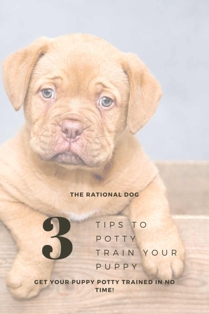 3 tips to potty train your new puppy.