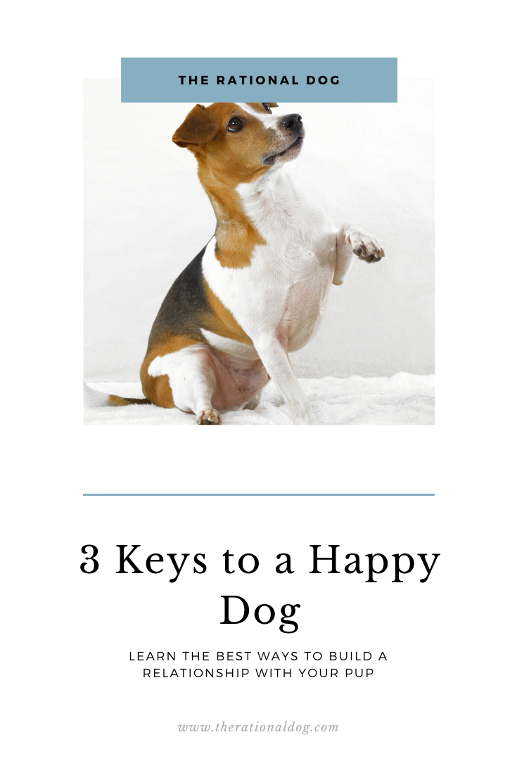 Dog training | 3 Keys to a happy dog