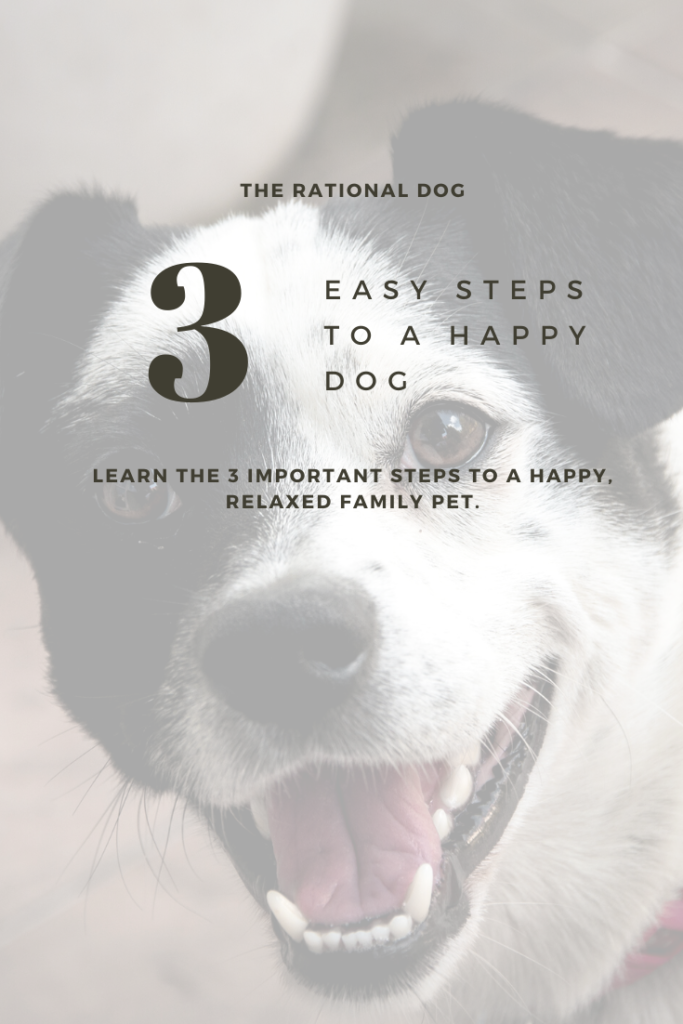 Dog Training | Pet dog ownership