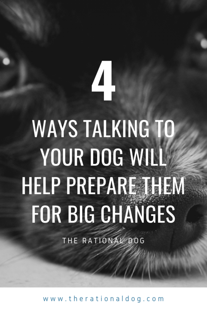 Use Cognitive Training to help your dog  with life changes