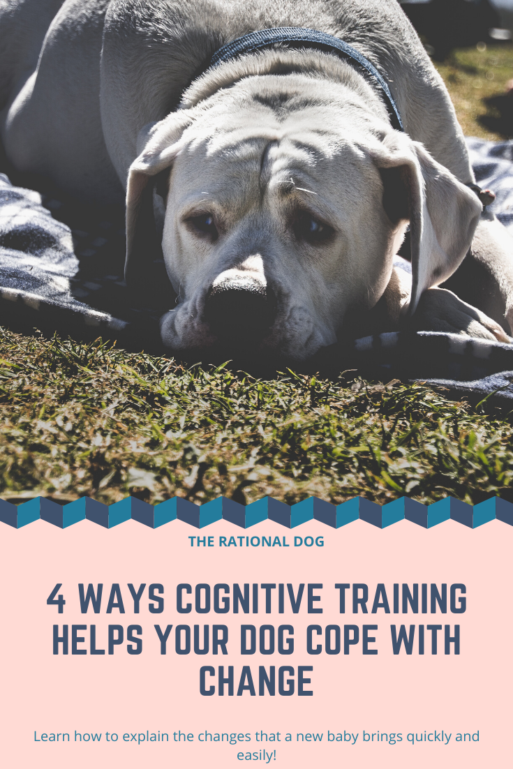 Dog Training, Cognitive dog training