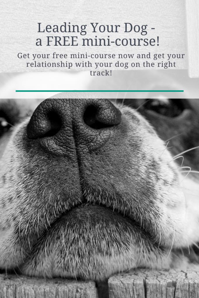 FREE dog training mini-course.