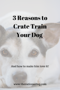 How to crate train your dog.