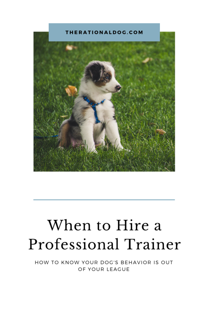 Learn when to hire a professional dog trainer to help with your dog's behavior problems.