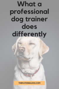 Learn how a professional dog trainer is different from books or online dog training courses.