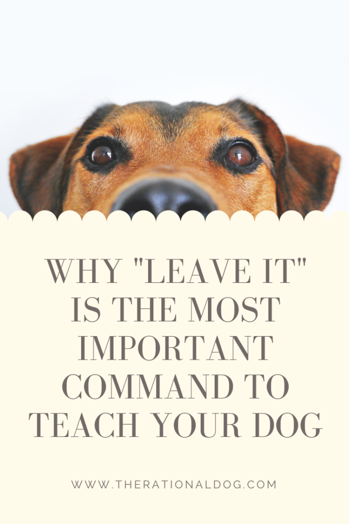 Why you should train your dog to Leave It