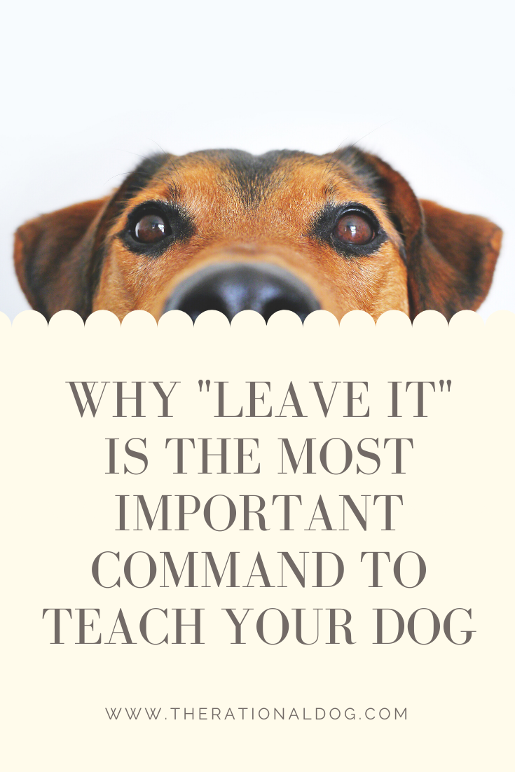 Why to train your dog the Leave It command