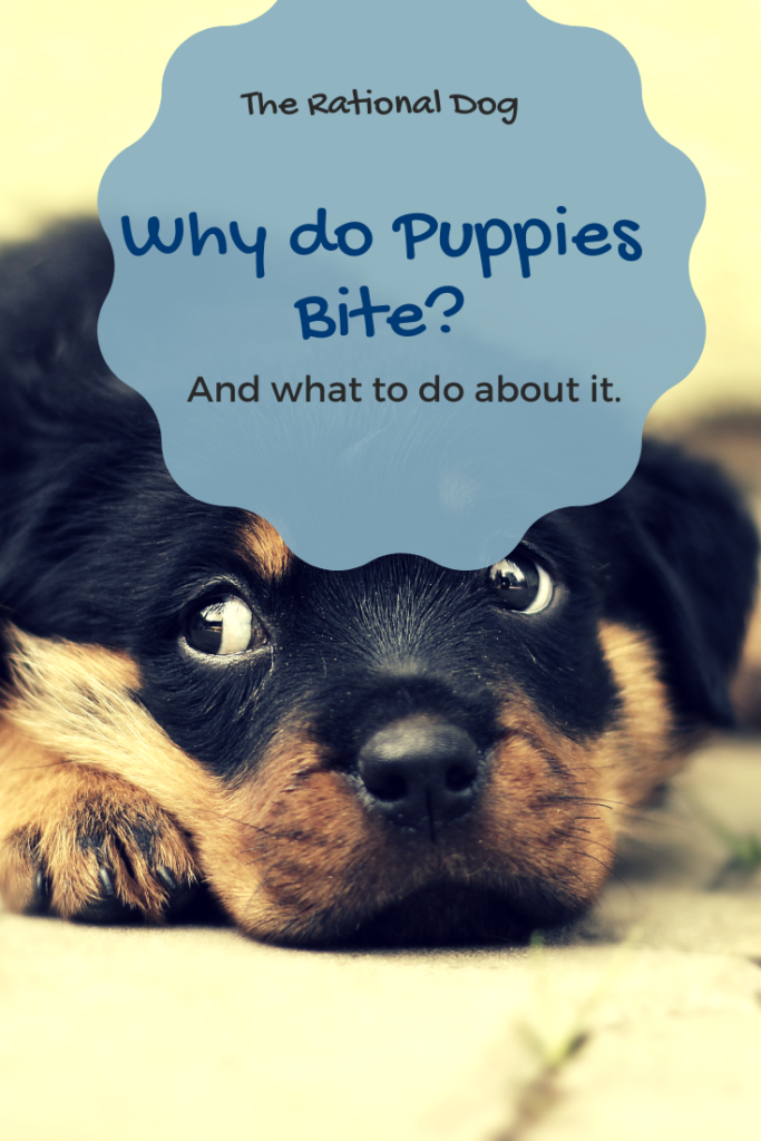 This simple formula will help you stop puppy biting.