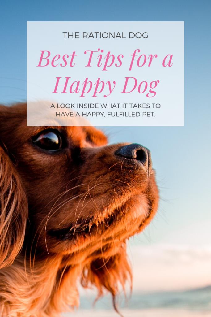 Dog Training | Happy Dog | 3 Keys to a great pet.