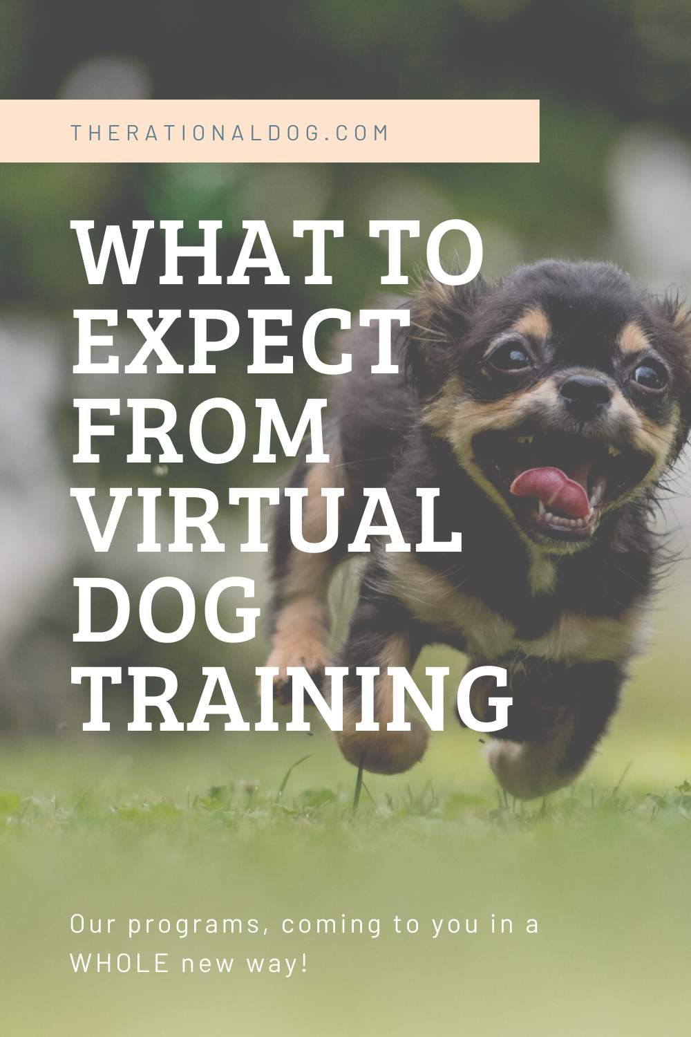 What to expect from Virtual Dog Training