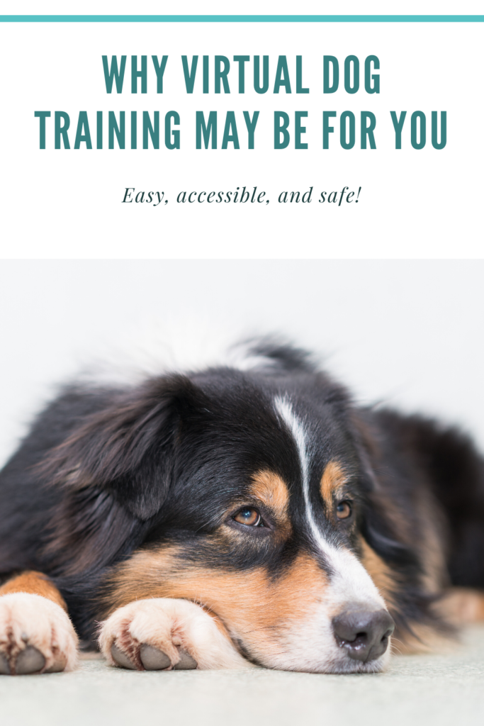 Why Virtual Dog Training is Great