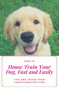 Potty train your puppy or dog