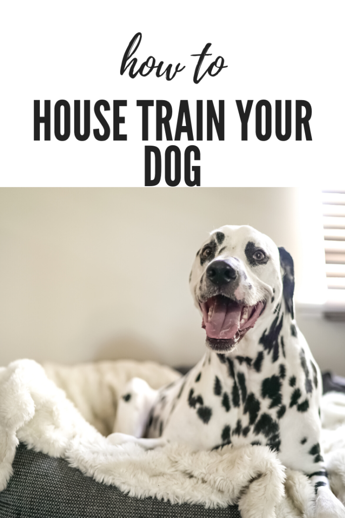 House Training your Puppy or Dog