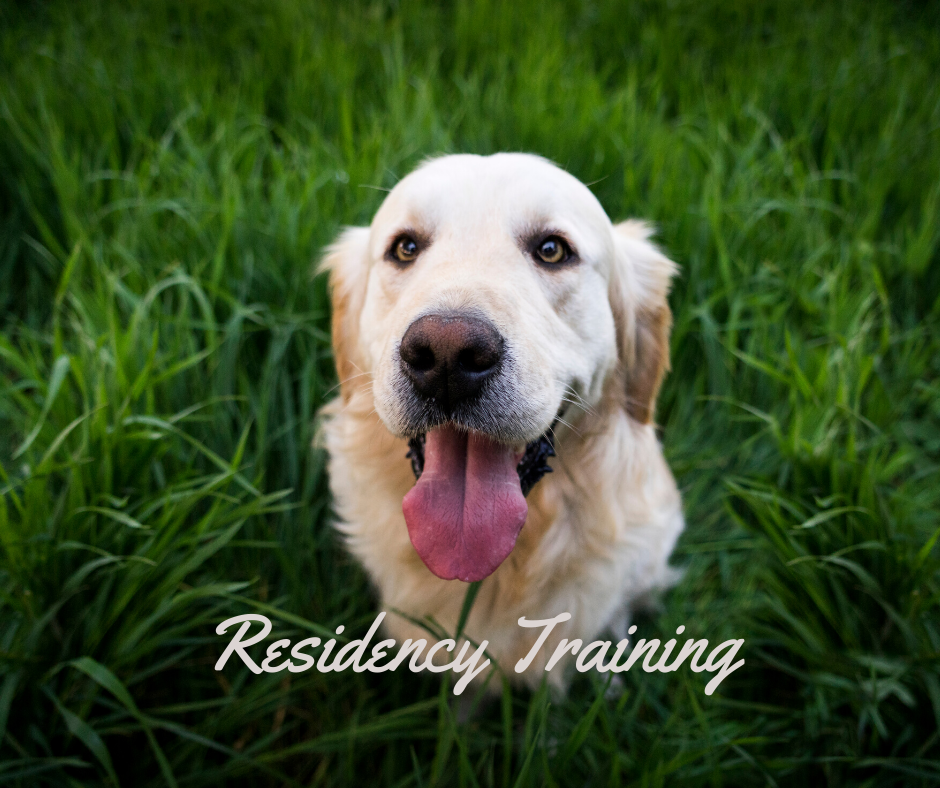 Board and train dog training