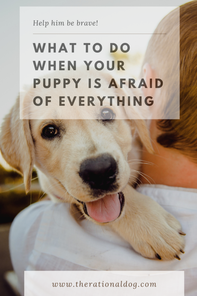 Help your puppy learn to be brave through his fear periods.