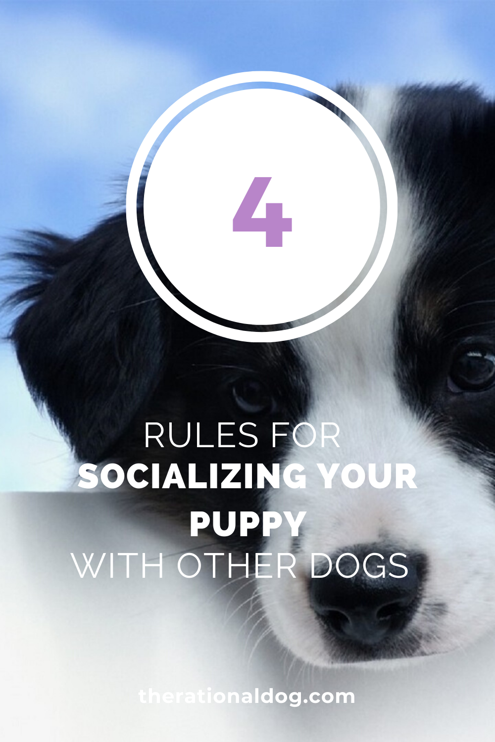 puppy training - socializing your puppy - dogs and puppies