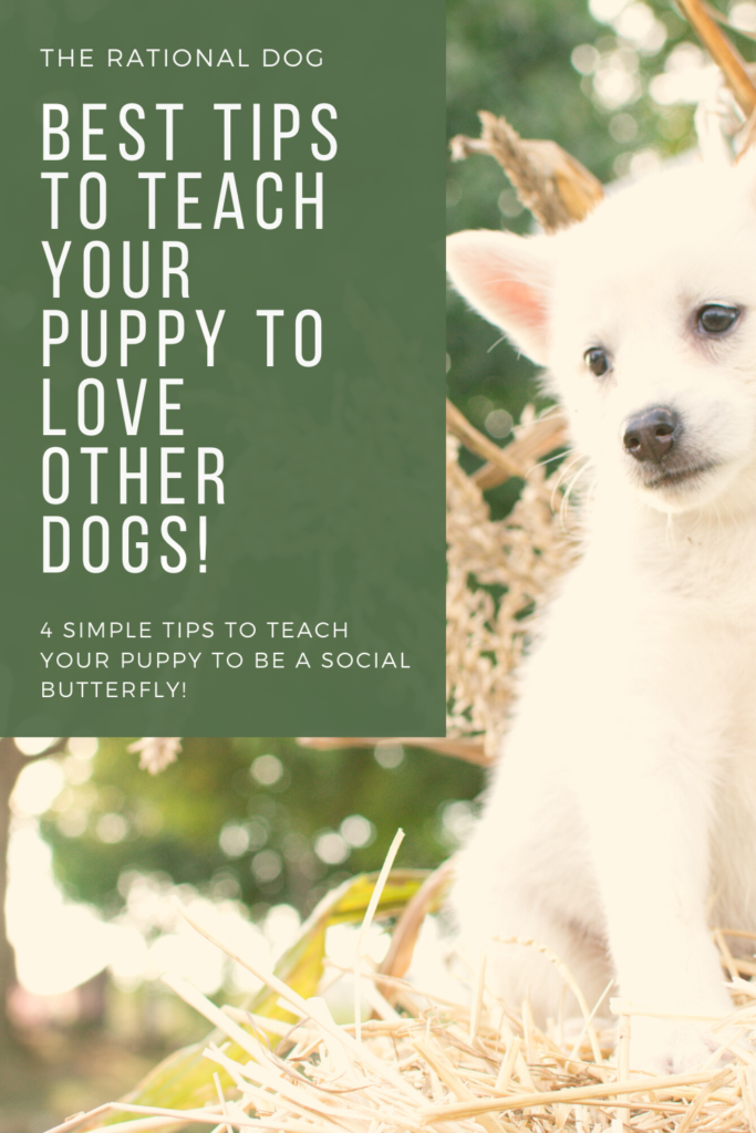 puppy training - socializing your puppy - puppies and dogs