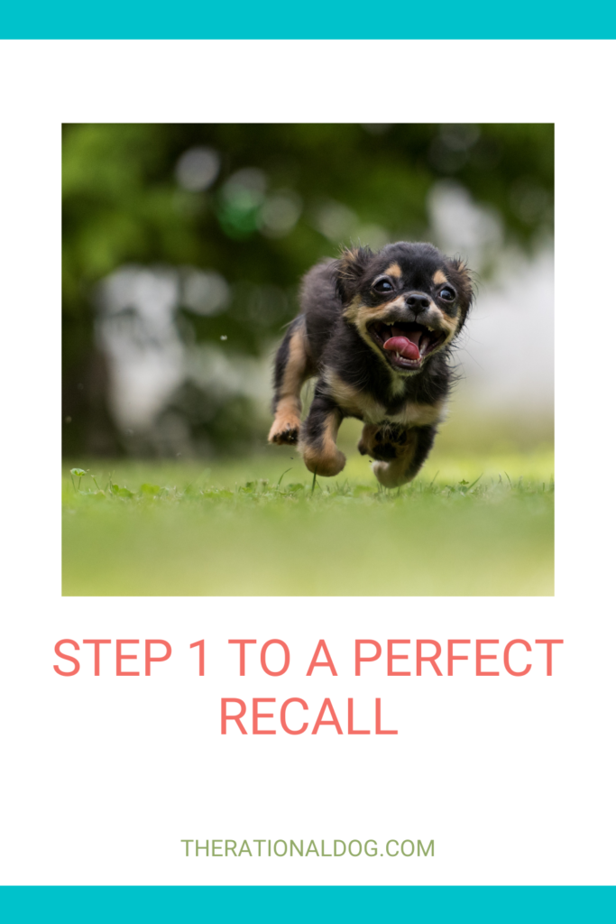 train your dog to come when called. dog   dog training   train your dog   come when called   recall