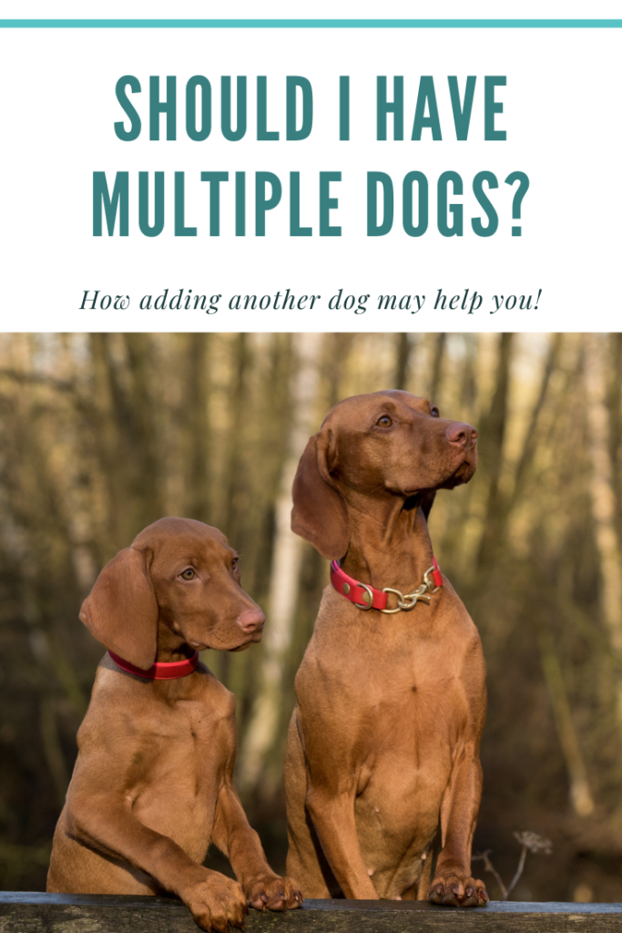 Multiple dogs may be a good option for your family.